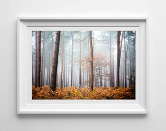 Foggy Autumnal Landscape, Original Photography Print, Woodland Trees, Wall Art, Decor