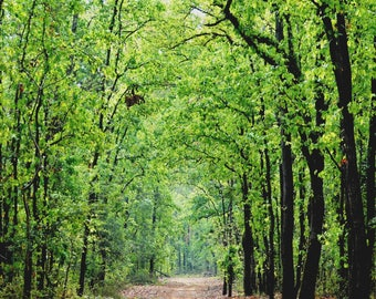 Lush green Forest! Photograph print For Nature and Wildlife Lovers for your home or workplace