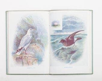 Children's Book of British Birds by G D Fisher - Vintage Bird Book c1950s