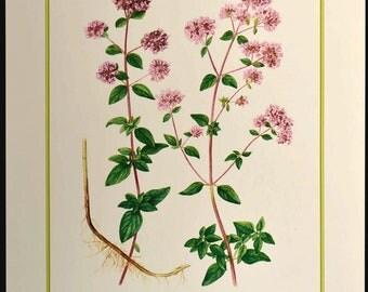 Oregano Print Flower Wall Decor Nature Botanical Art Pink