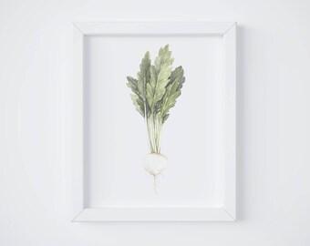 White Radish Print - Turnip painting - vegetable painting - Radish watercolor - home decor painting - kitchen art - dining room - food art