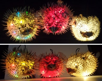 Etsy your place to buy and sell all things handmade for Puffer fish lamp