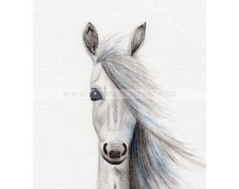 Water Colour Baby Foal Limited Edition Print