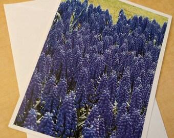 Hyacinth blue puple flower card with blank inside. Flower or garden, sympathy, congratulations, friend greetings wedding baby