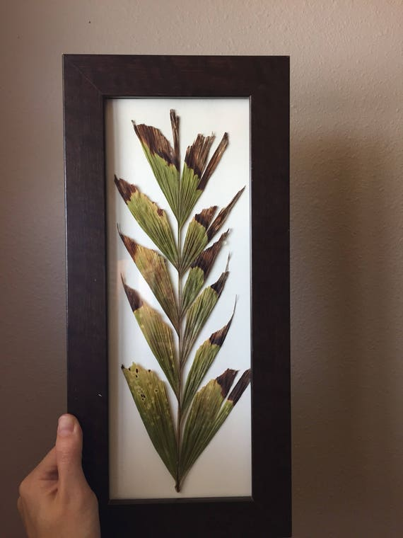 Fishtail Frond Herbarium -Tropical Foliage- Framed Tropical Plant Art- Pressed Botanical- Palm Tree Decor- Foliage Art- Rectangle Frame