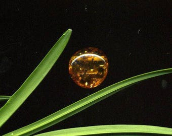 Amber (354) natural stone, smooth, 16 x 16 x 8 mm