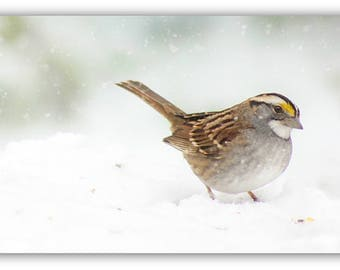 White Throated Sparrow Snowfall