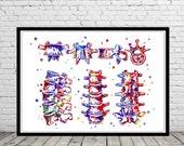 Lumbar spine structure, vertebral bone, watercolor lumbar spine, cervical vertebrae, lumbar vertebrae, skeletal system, orthopedice