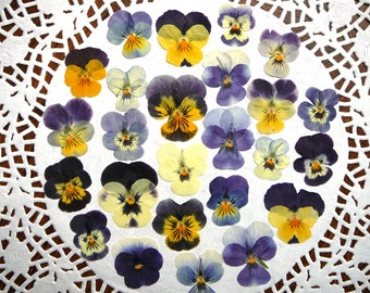 Dried pressed flowers, real dried pansies, pressed violas 20 pcs.