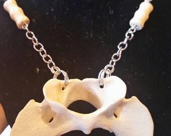 Coyote vertebrae necklace