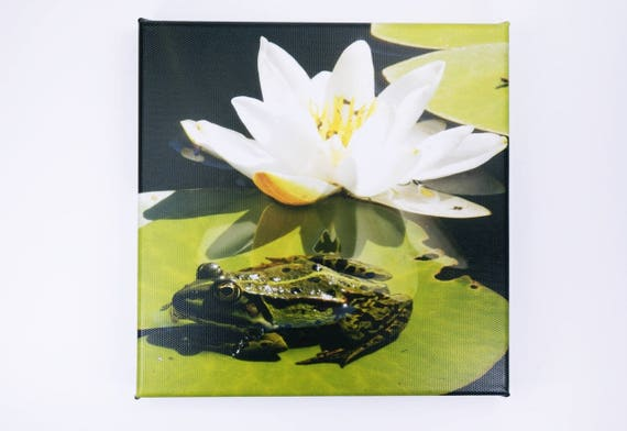 Picture frog with water lily-photography art print on canvas 20 x 20 cm print-wall decoration art white Water lily Green Tree frog-Green