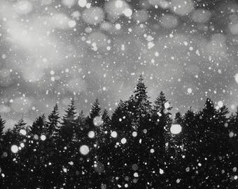 Snow Christmas Trees, Black and White Fine Art Photography Tall Trees, Snow Landscape  Winter Art, Black, Grey,White
