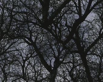 Timeless Treasures - Wicked C3760-Black Trees  **Half Yard Cuts**