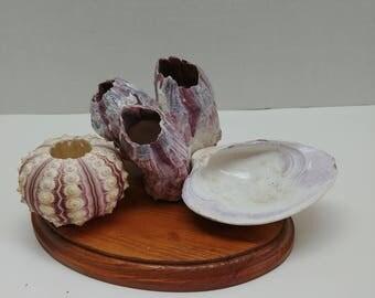 White and Purple Shell Pen Holder