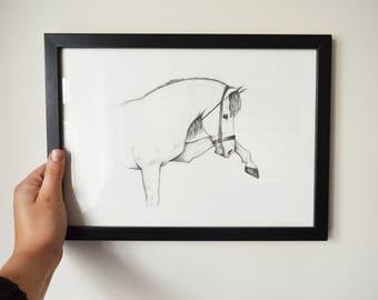 Original A4 framed artwork - Spanish Horse
