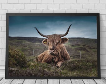 Highland Cow Art Print, Highland Cow Art, Highland Cow Photo, Scotland, Scottish Art, Printable Digital Download, Photography
