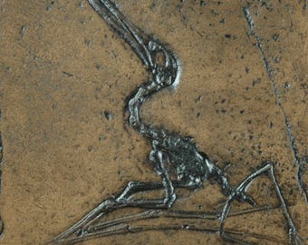 Pterosaur Dino Fossil Replica in Museum Quality. Animal fossils, replica, fossil imprint gift skeleton