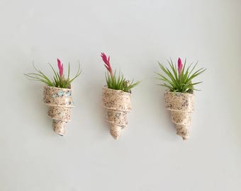 Set of 3 Handmade Spiral Air Plant Holders in Crystal Pink