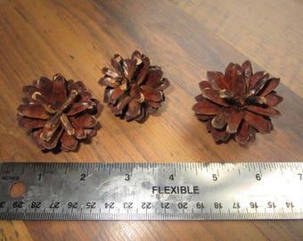 45 Pine cones