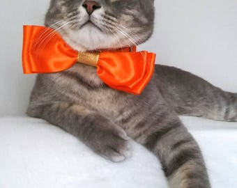 Orange Fancy Cat Bow Tie - Cat Bow Tie with Satin Collar and Bell - Halloween bow tie for cat