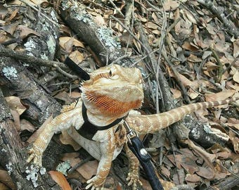 Bearded Dragon Tegu Pet Harness, Personalize it!  For Reptile and Lizard with or without Leash - 7 different colors