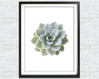 Succulent Print, Cactus Print, Botanical Print, Succulent Art, Succulent  Wall Art,