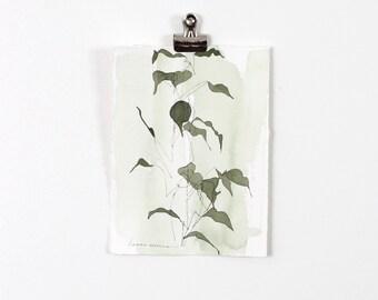 Green Blind Contour Botanical 2