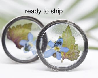 "16 mm (5/6 "") plugs dried flowers / / gauges dried flowers / dried plants"