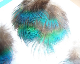 peacock feathers, the 3 necklace / peacock blue bib, beautiful color!