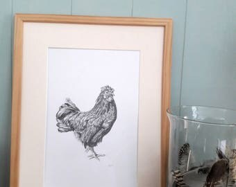 Rooster - an original pencil drawing
