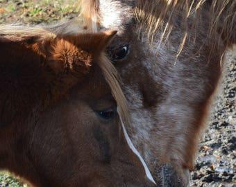 Horse Expression - Glued glued horses / Horse expression - Horses so closed