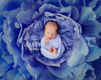 BOY newborn digital background/ newborn digital backdrop/ instant download