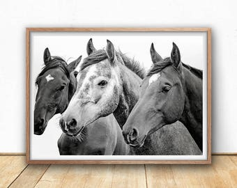 Wild Horses Print - Animal Portrait Wall Art, Black and White, Digital download, Close up, South western Decor, Scandinavian Wall Art, Pony