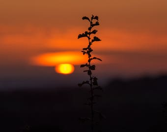 Hawthorn Sunset