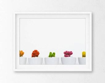 Minimalist Cactus Photography, Cactus Photography, Cacti Photography, Cactus, Cactus Wall Art, Cactus Print, Minimalist Photography