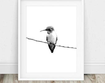 Hummingbird Drawing - Hummingbird Print, Hummingbird Sketch, Hummingbird Art, Pencil Drawing, Bird Drawing Print, Drawing Print, Drawing