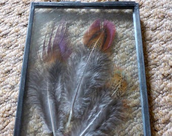 Pheasant feather's in a zinc glass frame.