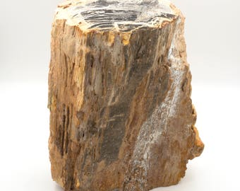 Permian petrified wood trunk from Paraguay - 15 x 10 x 23 cm - Weight: 4 kg.