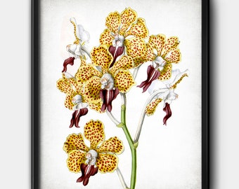 Yellow orchids · Flowers · Instant Download · Botanical · Printable #190