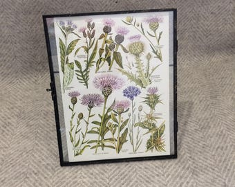 Vintage framed botanical drawing, flower illustrations, botanical print, floral, in glass frame, Green leaves Purple Thistles Scottish