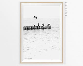 BIRDS and WATER PHOTOGRAPHY, Cormorant Photo, Nature Fine Art Photography, Water Photography, Black and White Photography, digital download