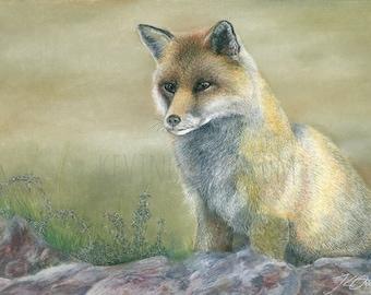 FOX PRINT - fox, fox art, decor, print, art decor, art, wildlife art
