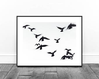 Bird Print, Flying Birds, Nature Print, Black and White Photography