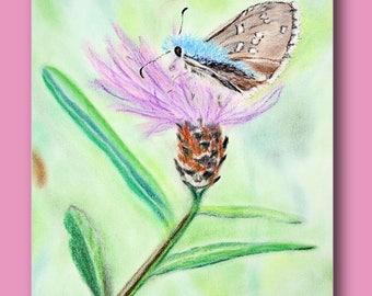 Beautiful butterfly on a cornflower blue pastel