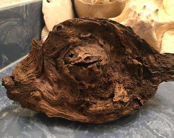 Diftwood Sculpture - Chameleon's Eye
