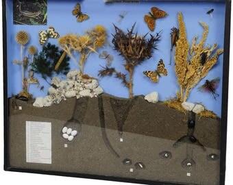 school teaching display of biosphere of poor grassland