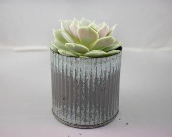 Medium Metal Planter with Succulent