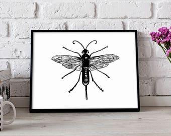 Wasp Insect poster, Wasp Insect wall art, Wasp Insect wall decor, Wasp Insect print, Gift poster