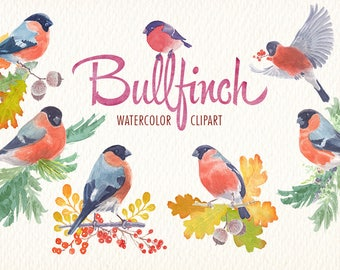 watercolor clipart bird bullfinch. Clipart of ideal watercolor for printables, cards, posters, web and more
