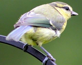 Bird on a perch